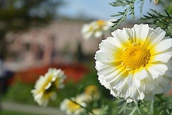 #Captured #Florals  #Gardens #SpringIsHere