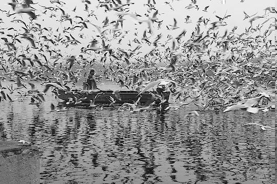 #birds #protecting #theman #delhi #delhibloggergirl #love-photography #birdphotography #rajasthan #indian #roposo #roposo-telent #talenthunt #mumbai  #birdsprotection