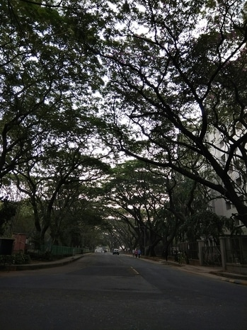 #dense #greens #trees #lovetheview #earlymorning