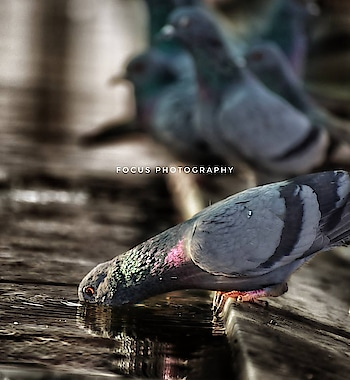 #click  #mosque   #dove  #click #nikond5300  #photography  #focusphotography #awesome  #water  #waterislife