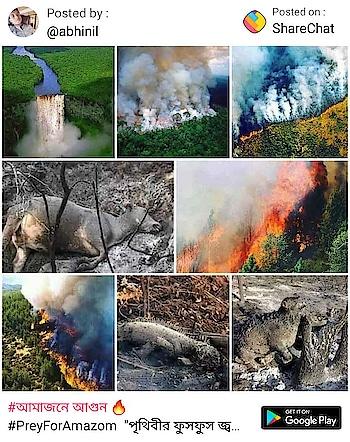 pray for rainforest