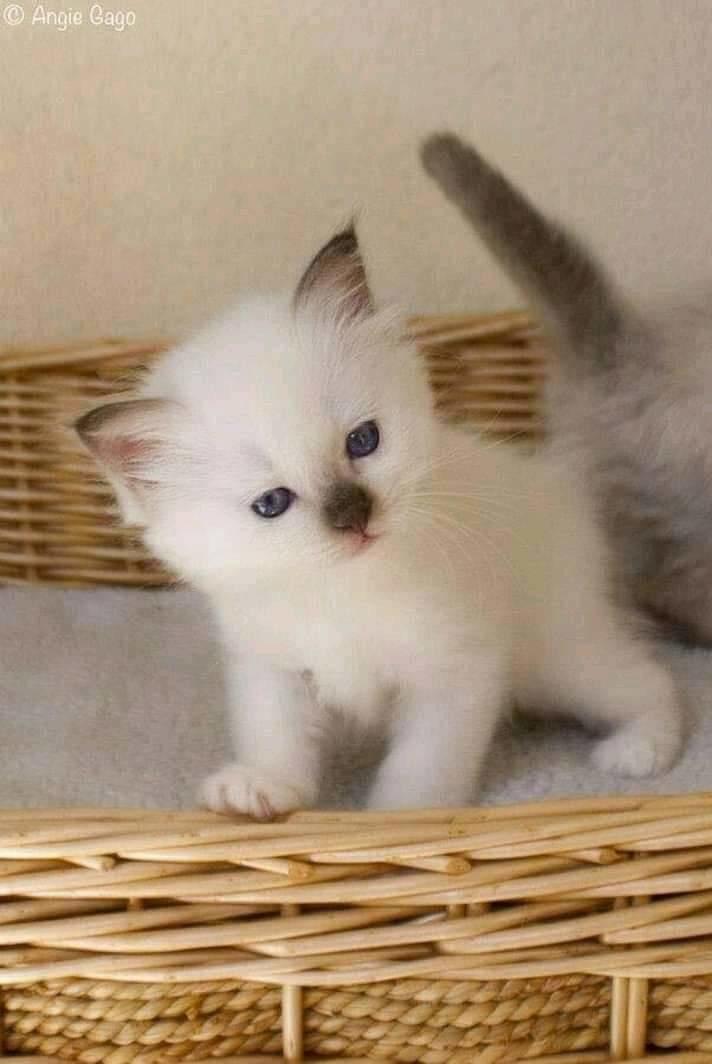 #cat #meowwww