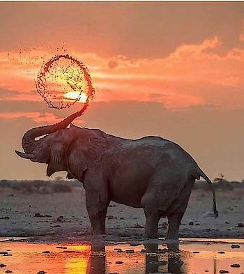 #animal #wildlifephotography #roposo-style #roposo