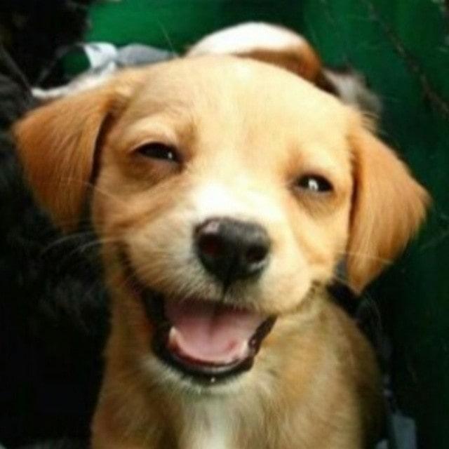 lovey puppy!! . . . . . . .. . #Dog #Dogs #Dogstagram #DogsOfInstagram #InstaDog #InstagramDogs #Pet #Petstagram #DogOfTheDay #DogLover #Dogs_of_Instagram #DogSitting #ILoveMyDog #LoveDogs #DogsAndPals #MyDog #DogsCorner #DogsOfIG #Doggy #DogsLife