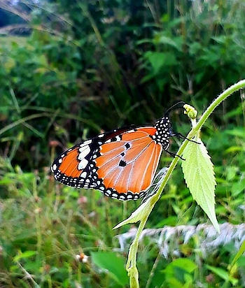 #beautiful-life #rops-style #butterflywings #butterfly #natureslove #wildlife #wildlifephotography #creatvity #forestanimals #flowerstyles_gf #roselove