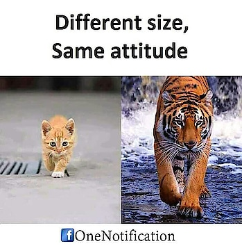 attitude is everything everything
