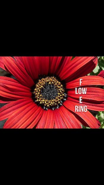 #flowerart #flowerpower #flowerslovers #flowermagic #flowerrings