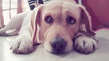 #pet  #lovethispic #doglove #jingle #mypetmybuddy #cute #cutedogs #babydog