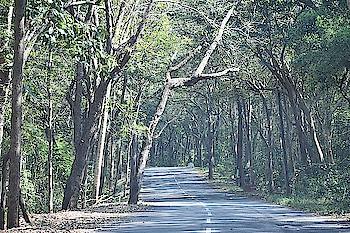 forests   🌳🌳🌳🌳 #roposoblogger  #roposotraveldiaries #maredumilli #nature #naturelover