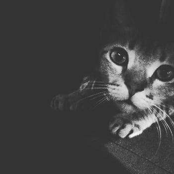 #cats #catphoto #cutenessoverloaded #furball