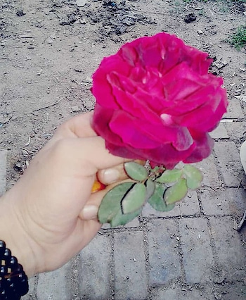 #love #flowers #rose #red-rose