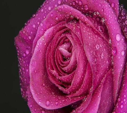 @rahila5  Very good morning Guys love u All fresh Gulab For mere Gulab jamun jaise  friends k liye 😘😘😘muuuaaaaa