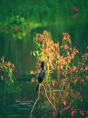 Bird. #birdphotography #birdsworld #birds #birdlover #nature #green #nature_lover #photo #photo-roposo #photogrphyoftheday #photogrphylover #photographyofindia #picture #pictureoftheday #northeast #northeastindia #image #roposo #roposo-trendings #roposo-lovers #roposophotography  @roposocontests @roposotalks @roposotutorial