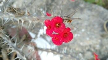 #flowers #flowerpower #thorns #tinyflower#macro #macrophotography #lenovophotography#closeshot #reposotalenthunt