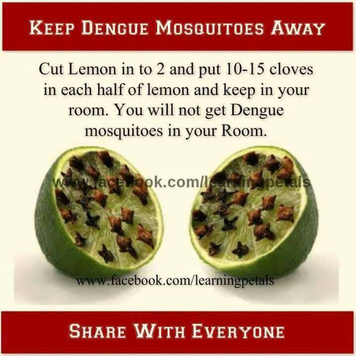 keep dengue mosquito away #healthtips