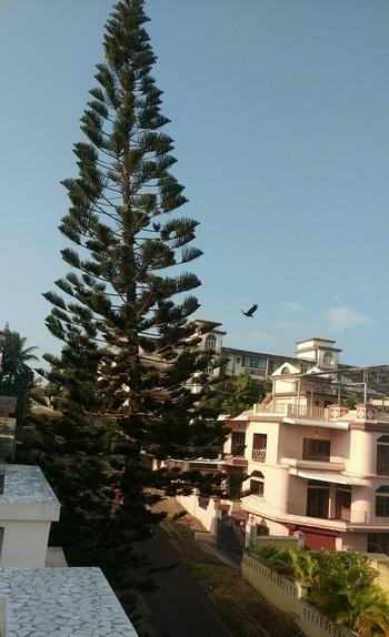 Goa mornings 😍 Day 2 #traveldiaries #goadiaries #goa #balconyview #morningmood #positivevibes #goodmorningpost #naturalbeauty #natureislove #lovefornature