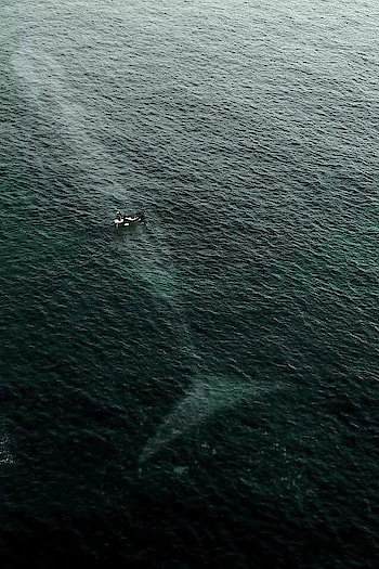 The outline of a Blue Whale is seen underneath a small boat in the Pacific Ocean. Wow