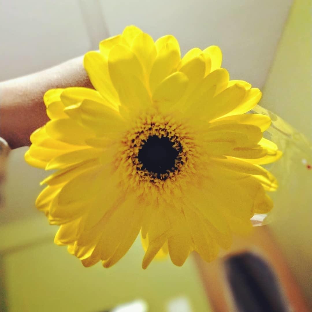 #sunflower #sunnymorning #sunshine #sun #sunny #yellow #yellowflowers #sunflowers🌻 #sunflowerseeds🌻 #sunflowersmile #sunflowersmakemehappy #dailypost #dailywisheschannel #followmeonroposo