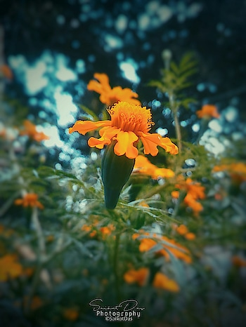 Flower.. #flowers #flowerlove #natural-flowers #flowerpower #flowerstyle #photo-roposo #photocontest #photography #photo #indian #indiaphotography #photographyofindia #tripura #northeast #picotheday #roposo #roposophotography