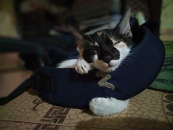 cuteness overload 😍 #cuteness-overloaded #roposo-cute #catsofinstagram #cats