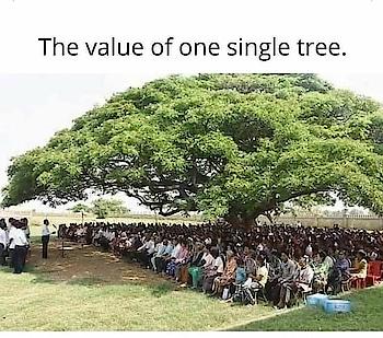 #value of tress #savetrees #jaga143