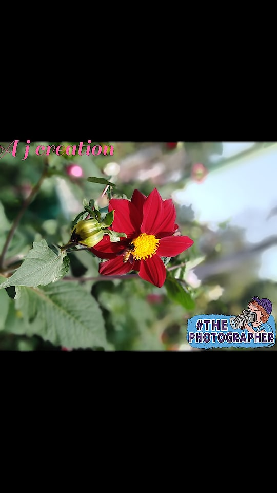 #PHOTOGRAPHY#photoshoot#nature#love#flowers#