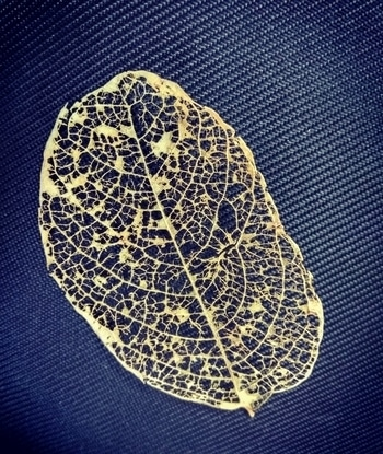 Beauty is everywhere! #dryleaf #nature #beauty #beautiful #lovefornature