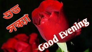 good evening...#good evening