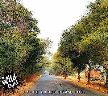 """""""If there were no trucks giving these trees a tough struggle while passing by, the beauty of the trees, the road and this landscape wouldn't have increased so manyfold."""" - @freemindtree  We are actually an infinitesimally small being in God's master plan!  #roadtrip  #mondaymotivation  #monday  #roadlesstravelled #life  #lifelesson  #motivation  #inspiringquote  #travellerlife  #instaquote  #photooftheday  #streetsofindia  #like4like  #quotestagram  #theotherbraininc #nomadsdiary #rajasthan #jaanekyadikhjaye #myrajasthan #roposotraveldiaries #roposomoments #wildchild"""