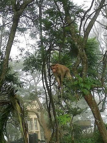 Let''s jump.  #monkey #trees #hills #fogg #foggy #travelscenes #captured #clickclick #phonephotography