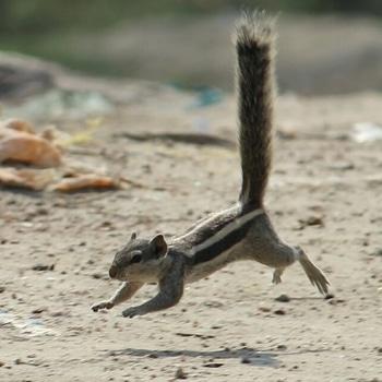 I AM IN T H E A I R   squirrel #wayfair #wayfairpetsquad # petsquirrel #squirrels #squirrellove # squirrellife #squirrelsofig # squirrelsofinstagram #easterngreysquirrel # easterngraysquirrel #ilovesquirrels