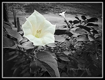 #bnw_captures #bnwphotography #beautifulflowers #photoofthedays #photographers_of_india #throwbackthursday