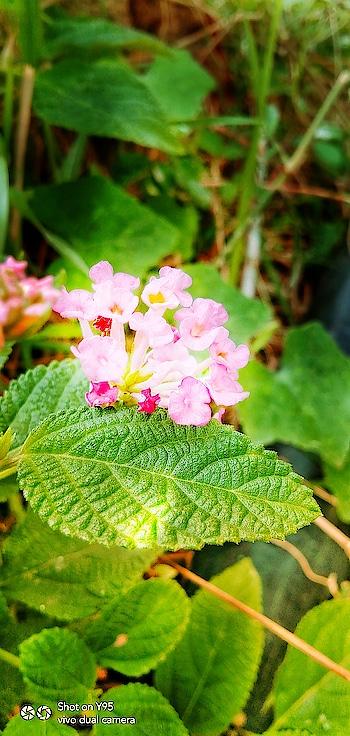 #naturalremedies  #nature  #nature_world  #naturalpurifier  #professional #photo-shoto  #mobile_shot  #sunnies