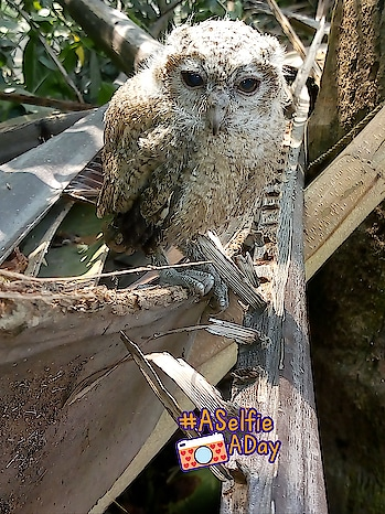 my first click of owl #aselfieaday