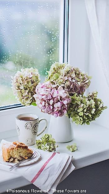 #flowerslovers ....