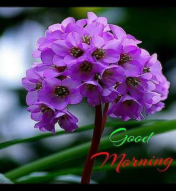 #goodmorning #goodmorningpost #goodmorningworld #dailywishes #dailywisheschannel #goodmorningfriends #goodmorningall