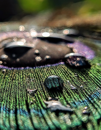 drops in details.. . . #feather #roposocontest #teampixel  #macrophotography  #bestshots