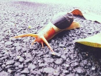#roposocontest #shotonmoto #roposo #roposoacademy #wildlife #snail #contestindia #roposotalenthunt