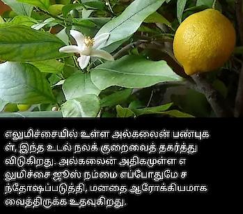 #tamil #rangoli #healthtips #lemon  #usesandbenefits