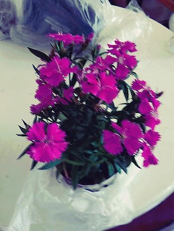#flowers  #pink  #plants