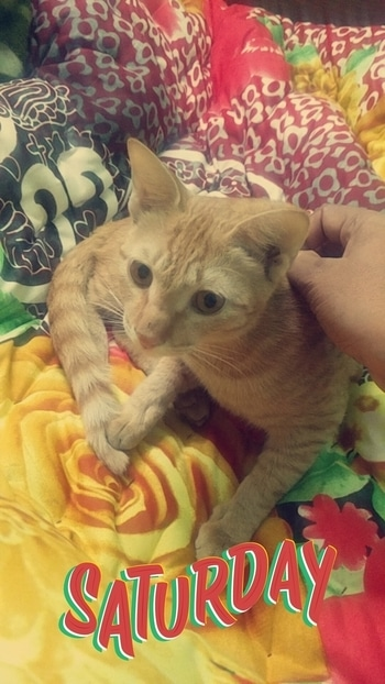Her love is so unconditional towards me.🐱 #mycat🐱#mycatisbetterthanyours #catsagramm #kitten #kitty #kittens #mypet🐱 #pets #meong #neko #petstagram #petsagram #photooftheday #catsofinstagram #ilovemycat #instagramcats #kucing #catoftheday #lovecats #furry #sleeping #lovekittens #adorable #catlover #instatag