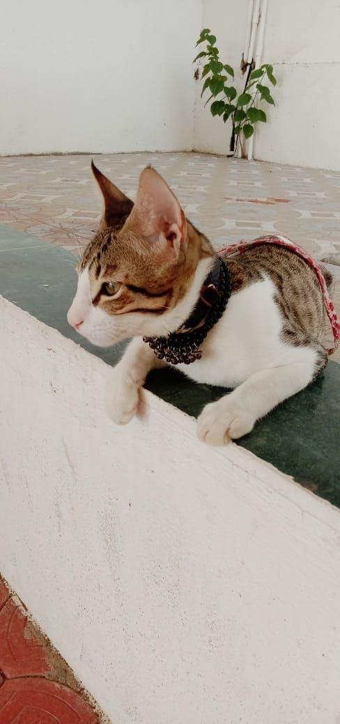 #catlover
