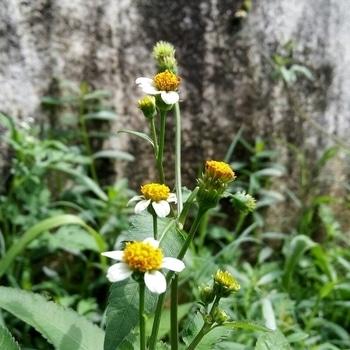 #spotclick #flowers #littleflowers #nature #natural #manipraveen27