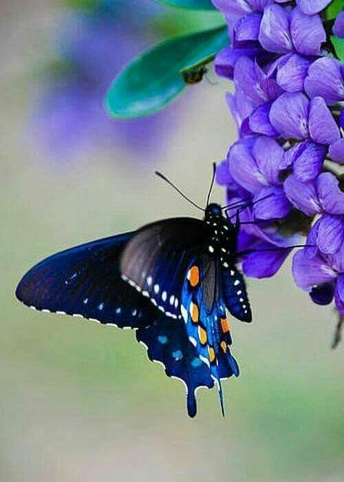 #butterfly #awosome #naturephotography #naturwalk #viewoftheday #beauitful #thepoweriswithinyou