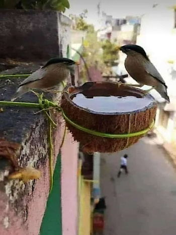 In this summer, please put water to the birds on your terrace. in house. birds are died due to, no water. please. do this idea.