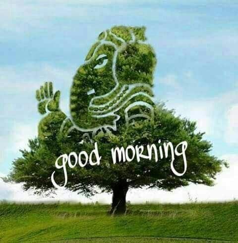 #goodmorning #dailywishes #dailywisheschannel #goodmorningworld #goodmorningfriends #goodmorningpost #goodmorningall #goodmoring #goodmorningwishes #goodmorningroposiyans #goodmorningroposo #goodmorning_frnds # • • 🌅 #goodmorning #good_morning #toptags #morning #mornings #goodmorningpost #beautiful