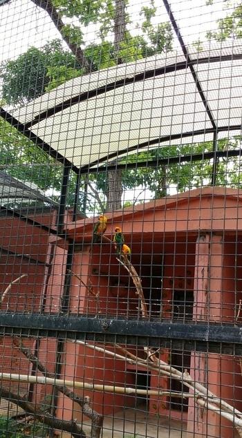 lovely bright n exotic birds at malsi deer park dehradun