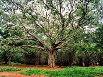 #nature  #art  by God  #trees #park #travel #karnataka #bangalore