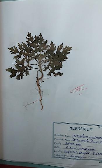 herbal