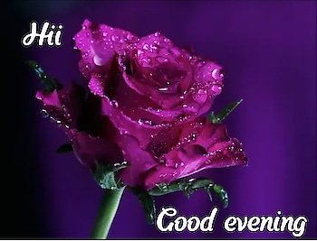 Good evening all #roposogoodevening #roposodailywishes #goodeveningpost